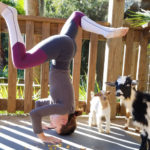 Where to do Goat Yoga in Central Florida