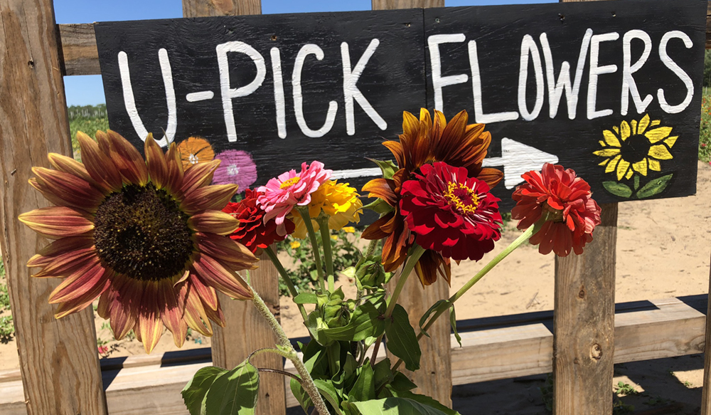 Where to Pick Your Own Flowers in Central Florida