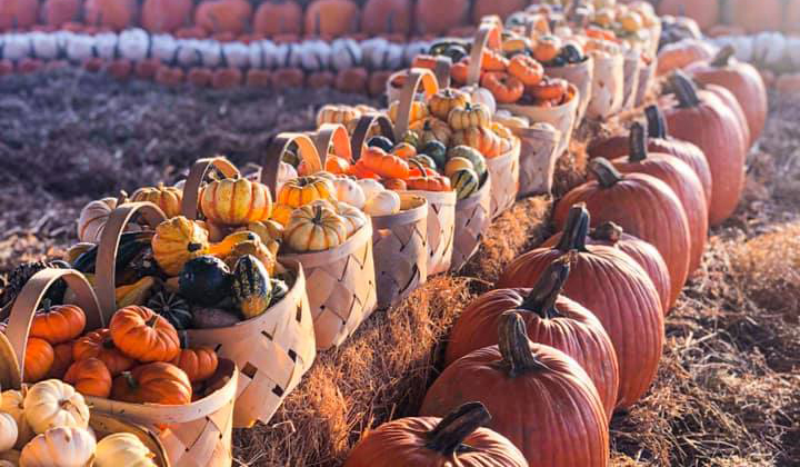 Orlando Fall Festivals Pumpkin Patches and Foodie Events